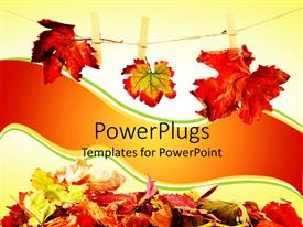 PowerPlugs: PowerPoint template with stack of rusty autumn leaves on the ground and three autumn leaves hanging on a clothesline hold by wooden clothespin
