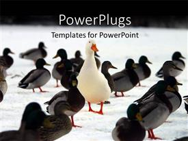 PowerPoint template displaying stand out concept using animals
