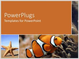 PowerPlugs: PowerPoint template with a star fish and a golden fish