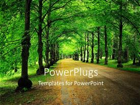 PowerPoint template displaying a street view of a forest with many trees