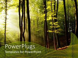 PowerPoint template displaying sun light shining through los of trees in the woods