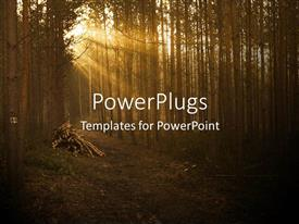 PowerPlugs: PowerPoint template with sun set view of a forest with a cleared foot path