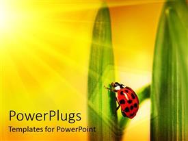 PowerPlugs: PowerPoint template with sun shining on ladybug climbing a leaf