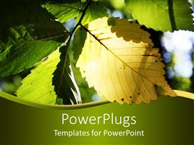 PowerPoint template displaying sun shining on yellow and green elm leaf making it glow