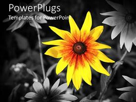 PowerPlugs: PowerPoint template with a sunflower with black and white flowers in the background