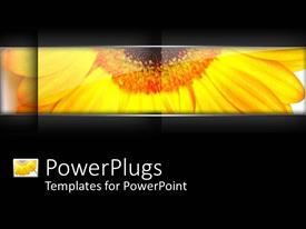 PowerPlugs: PowerPoint template with a sunflower with blackish background and place for text