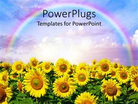 PowerPlugs: PowerPoint template with sunflower garden with a rainbow over them in the clouds