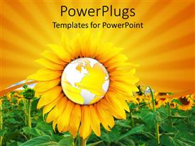 PowerPlugs: PowerPoint template with a sunflower with the globe in the middle and a lot of sunflowers in the background