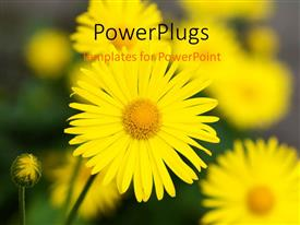 PowerPlugs: PowerPoint template with a sunflower with a number of sunflowers in the background