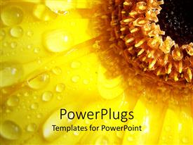 PowerPlugs: PowerPoint template with a sunflower with water droplets on it