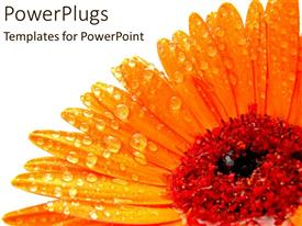 PowerPoint template displaying a sunflower with water droplets on the petals