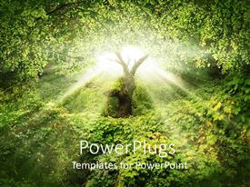 PowerPlugs: PowerPoint template with the sunlight coming out of a tree with bright background