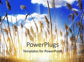 PowerPlugs: PowerPoint template with sunlight filtering through dense growth of tall grasses