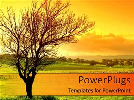 PowerPlugs: PowerPoint template with sunset behind bare tree, green grass