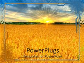 PowerPoint template displaying sunset country landscape, wheat field, agriculture, farming