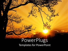 PowerPlugs: PowerPoint template with sunset depiction with large tree and sun behind clouds