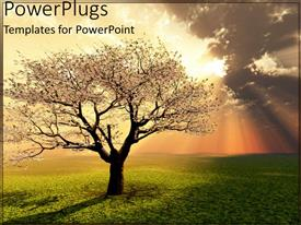 PowerPlugs: PowerPoint template with sunset view of a tree with sunny sky and grass