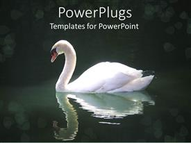 PowerPlugs: PowerPoint template with swan swimming in dark pool of water with reflection in water