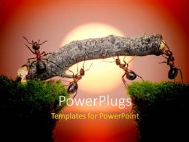 PowerPlugs: PowerPoint template with team of ants constructing bridge over water on sunrise
