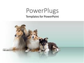 PowerPlugs: PowerPoint template with three dogs on blue and white background