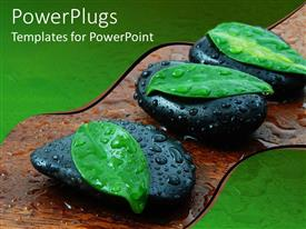 PowerPlugs: PowerPoint template with three leaves atop black stones with water drops