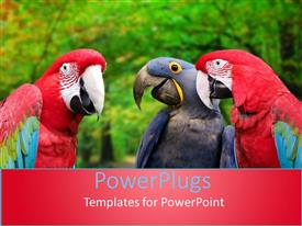 PowerPlugs: PowerPoint template with three red and blue colorful parrots over blurred trees with green leaves in the background