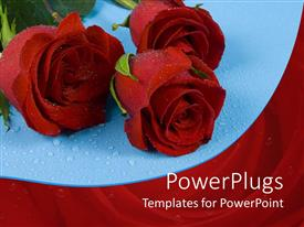 PowerPlugs: PowerPoint template with three red roses with water rain drops on blue background