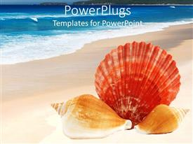 PowerPlugs: PowerPoint template with three sea shells, lying on the shores of a blue sea