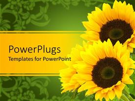PowerPlugs: PowerPoint template with three sunflowers yellow and green background