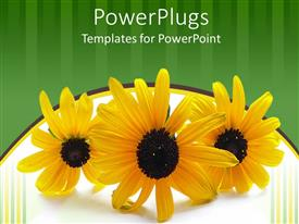 PowerPoint template displaying three yellow flowers on green and white background