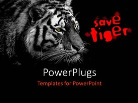 PowerPoint template displaying a tiger with the appeal to save tiger and blackish background