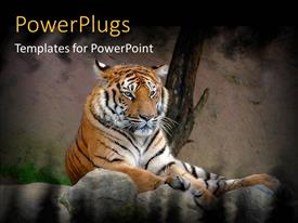 PowerPoint template displaying tiger lying on a rock on a natural background