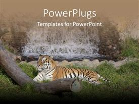 PowerPlugs: PowerPoint template with tiger resting on green vegetation with waterfall and log of wood