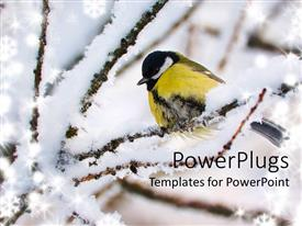 PowerPlugs: PowerPoint template with titmouse with winter snow on tree branches