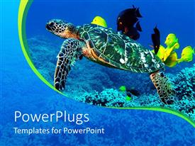 PowerPlugs: PowerPoint template with a tortoise with a number of fish in the background
