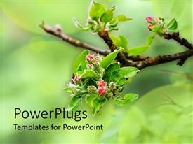 PowerPlugs: PowerPoint template with a tree branch with some blossoming green leaves and pink flowers