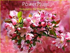 PowerPlugs: PowerPoint template with tree branch with pink apple blossoms