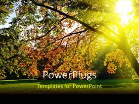 PowerPlugs: PowerPoint template with a tree in the forest with a sunshine in the background
