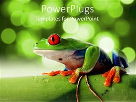 PowerPlugs: PowerPoint template with tree frog with red bulging eyes on bamboo tree
