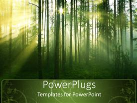 PowerPoint template displaying tree with leaves in forest with sun rays passing through trees