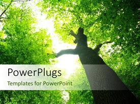 PowerPlugs: PowerPoint template with a tree with a lot of sunshine and place for text