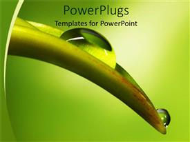 PowerPlugs: PowerPoint template with a tree with water drops ripping downwards