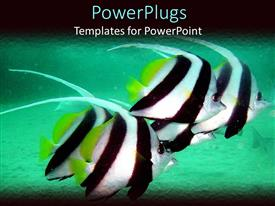 PowerPlugs: PowerPoint template with tropical black and white fish in aquarium