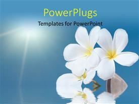 PowerPlugs: PowerPoint template with tropical flower Plumeria alba and seashell with sea
