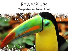 PowerPlugs: PowerPoint template with a tucan enjoying its time with blurred background