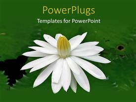 PowerPoint template displaying a tulip flower in the lake with a place for text