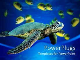 PowerPoint template displaying a turtle is swimming in sea and fishes are also swimming in water