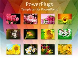 PowerPlugs: PowerPoint template with twelve depictions of flowers, pink tulips, sunflowers, white flowers, yellow, white pink and yellow flowers