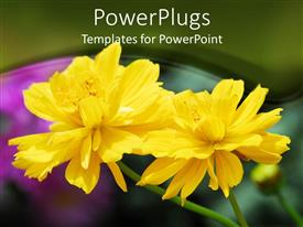 PowerPoint template displaying two beautiful bright yellow colored flowers in a garden
