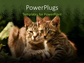 PowerPoint template displaying two beautiful cats with long whiskers on green patterned background